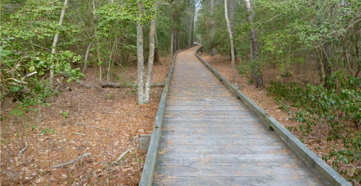 Boardwalk through Estell Manor Park - Photo credit: Daniela Wagstaff