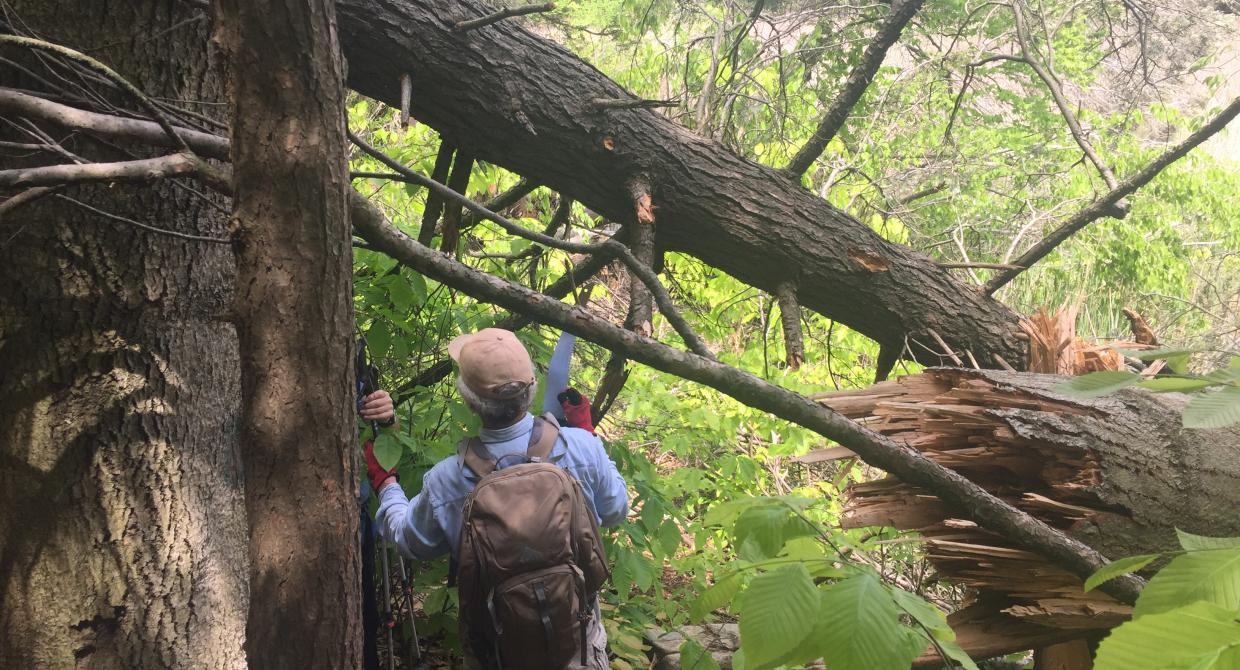 Volunteers examine blowdown on the Long Path in Harriman State Park after a violent storm in May 2018. Photo credit: Kevin McGuinness.